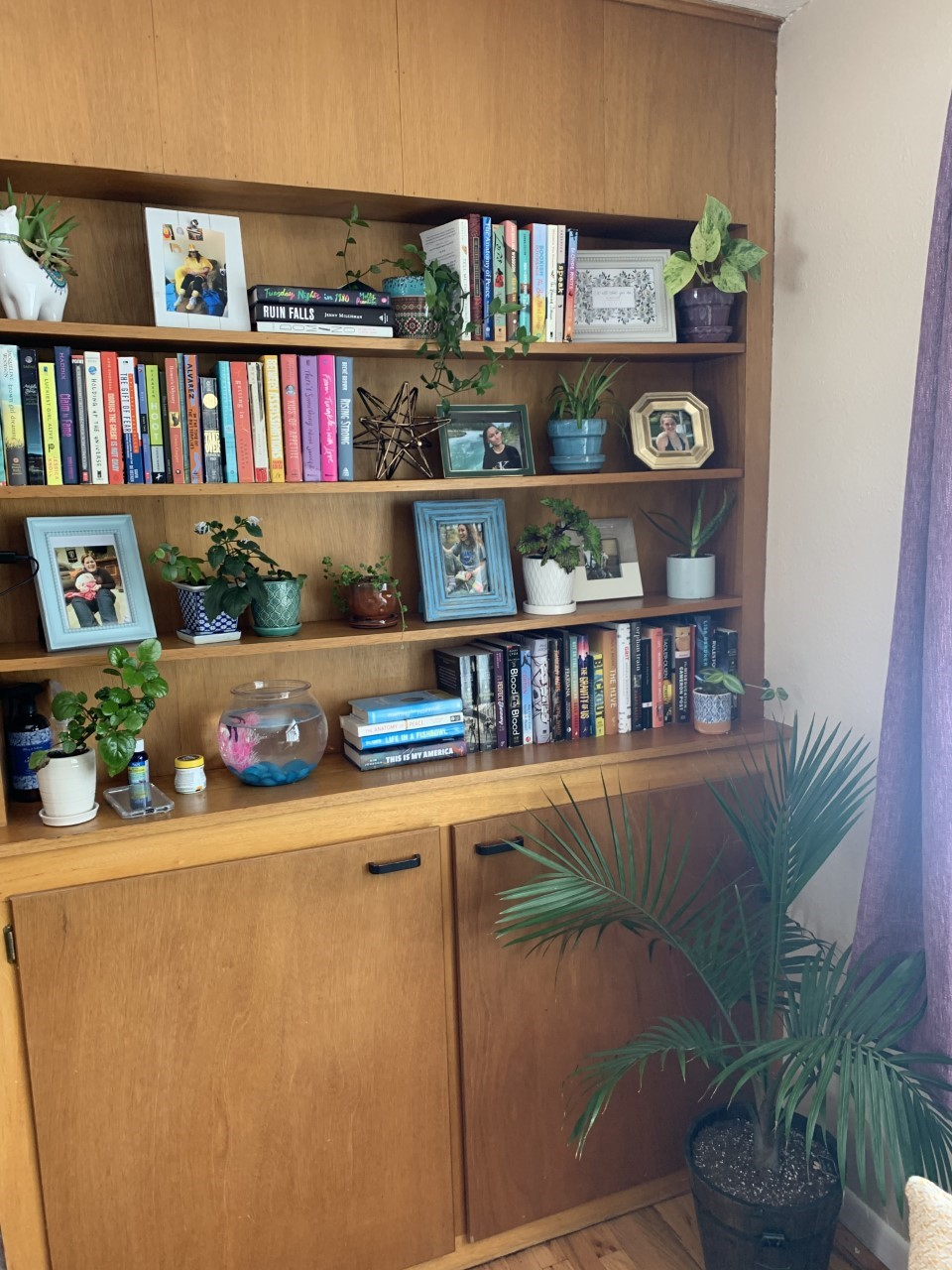 Transition house bookcase